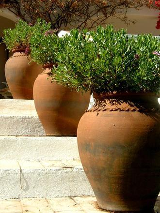 Large Potted Plants- Reno